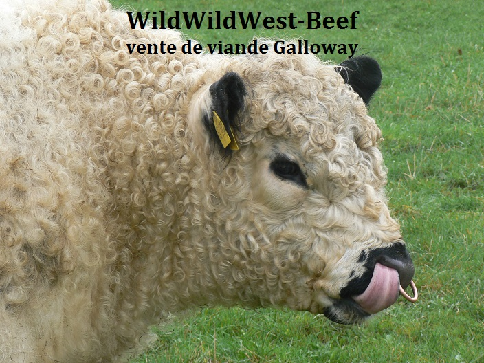 Galloway Wildwildwest Beki